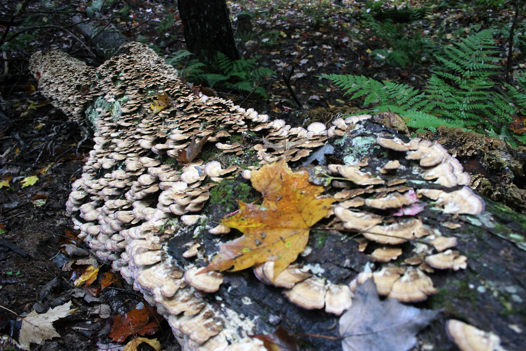 A photograph of a log with decomposers.