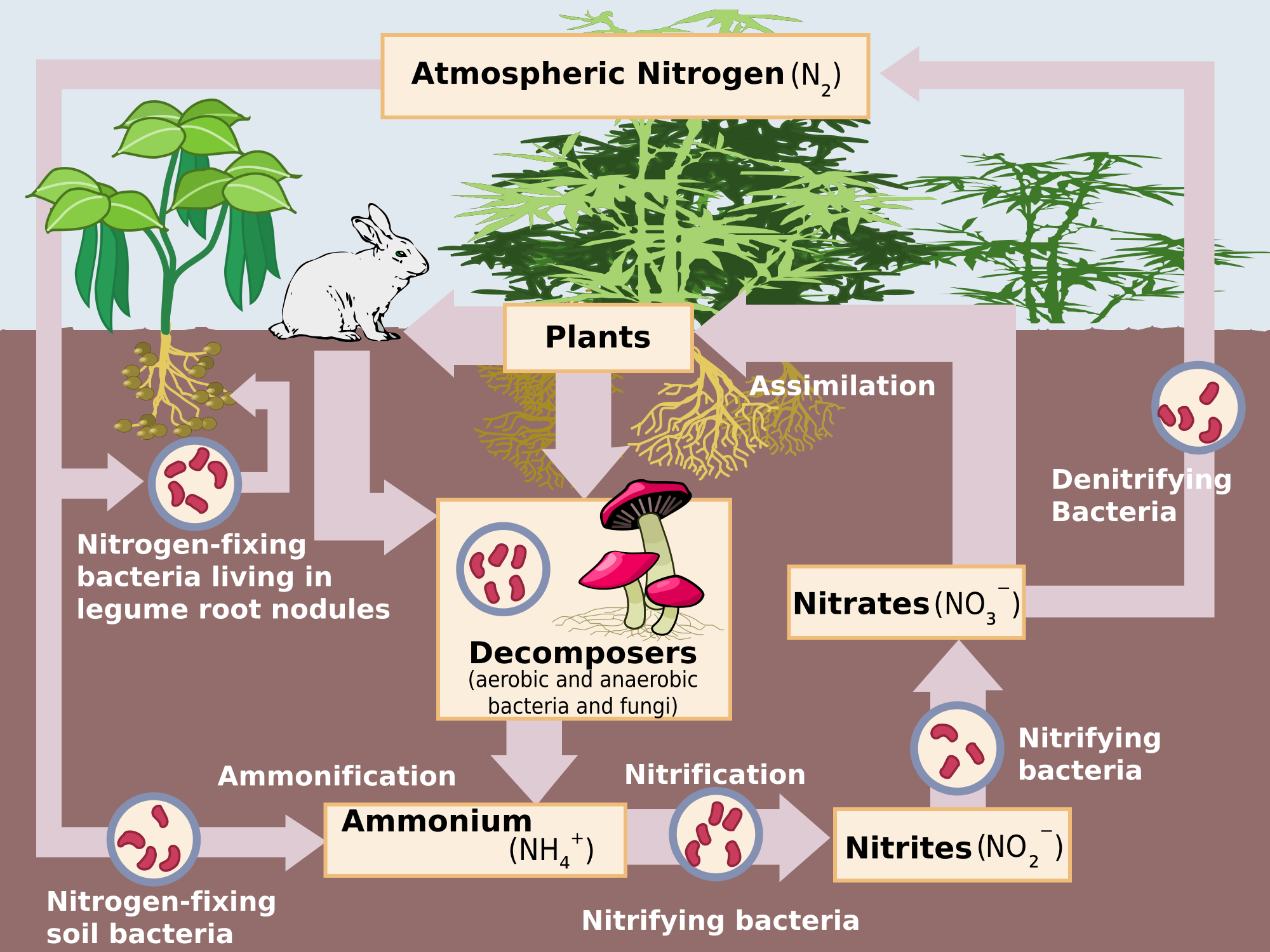 Nitrogen Cycle Game