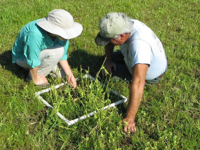 Two people sampling plant species using a quadrat.