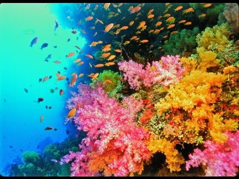 A photograph of coral reef.