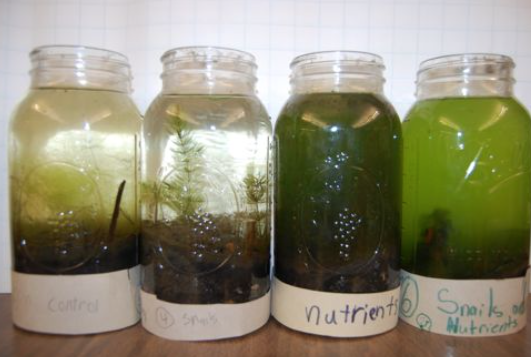 A photo showing different treatment jars in the Pond in Peril experiment.