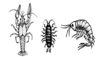 A picture of some magnificent macroinvertebrates.