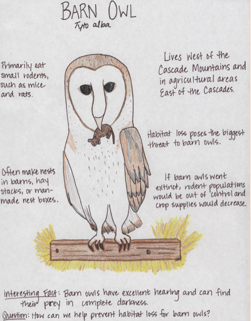 A poster of Barn owl.