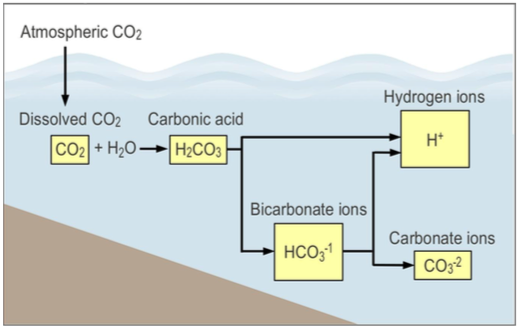 A diagram of the carbon cycle.